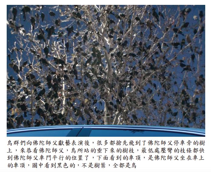 《揭開真相》二十六-提前預言百萬飛鳥到jpg3.png