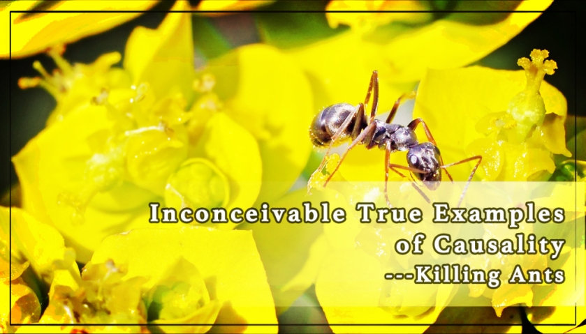 inconceivable-true-examples-of-causality-killing-ants-