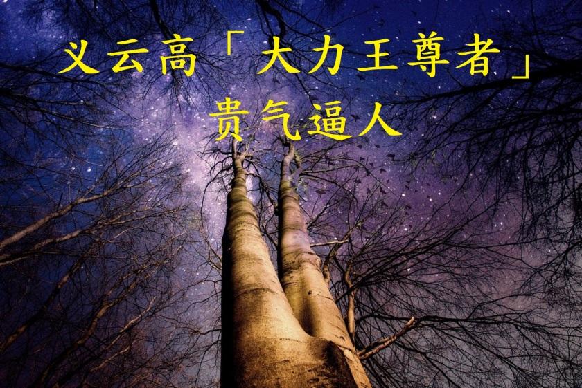 义云高(H.H. 第三世多杰羌佛)「大力王尊者」贵气逼人